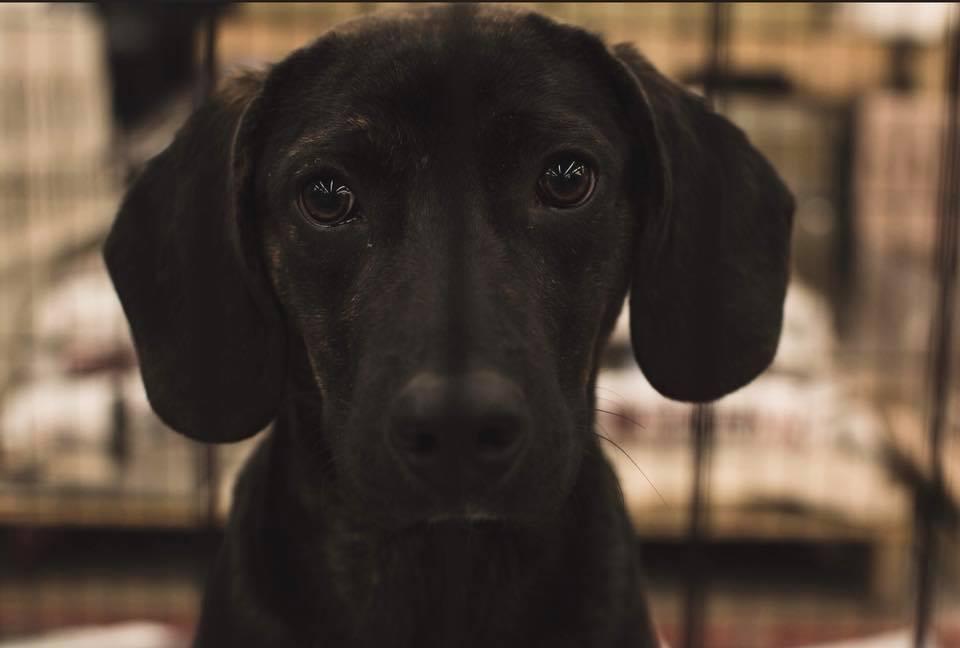 happy life animal rescue foster