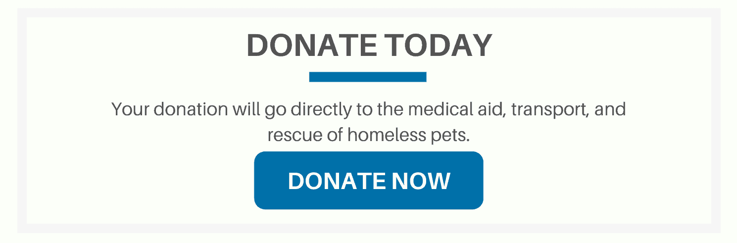 Donate to help the animal rescue cause